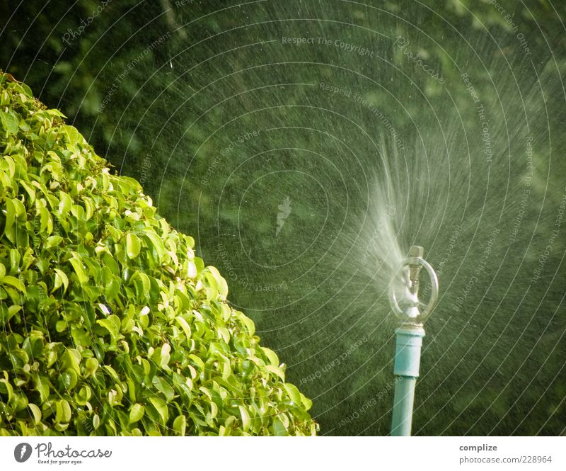 Water Green Tree Plant Fresh Drops of water Bushes Inject Cast Foliage plant Horticulture Swirl Jet of water Blow up Splash of water Lawn sprinkler