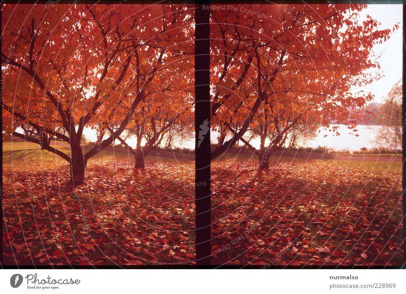 Nature Tree Plant Red Leaf Colour Autumn Environment Landscape Moody Park Weather Natural Esthetic Climate Authentic