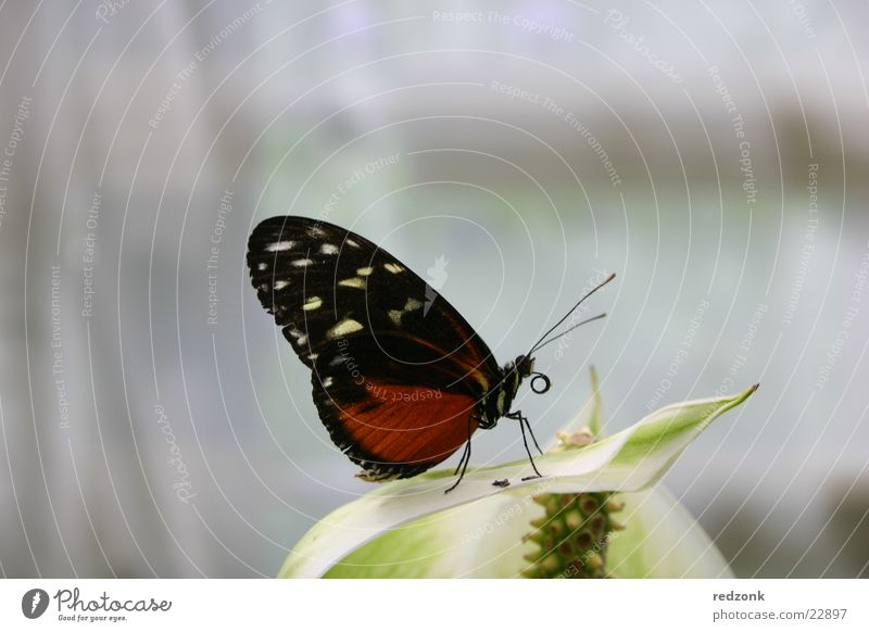 Butterfly II Spotted Red Black Leaf Calm Sleep Feeler Relaxation Nature Macro (Extreme close-up) Close-up Detail Free