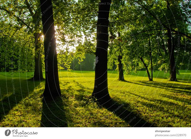 Nature Tree Plant Sun Summer Calm Relaxation Meadow Environment Landscape Grass Spring Park Weather Climate Bushes