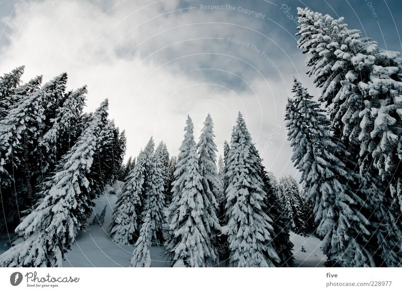 Sky Nature Tree Plant Winter Clouds Forest Cold Snow Landscape Mountain Ice Frost Hill Alps Fir tree