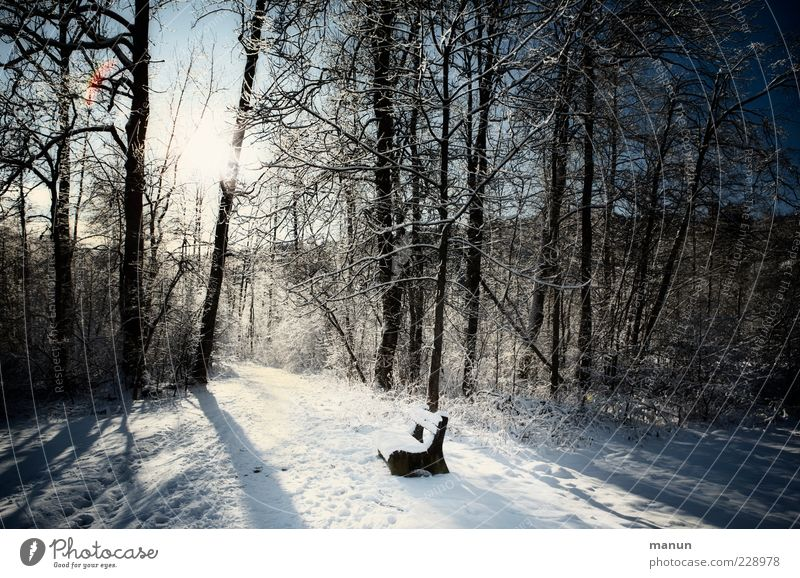 headlights Nature Winter Beautiful weather Ice Frost Snow Tree Forest Bench Wooden bench Simple Cold Calm Loneliness Idyll Stagnating Seating Center point