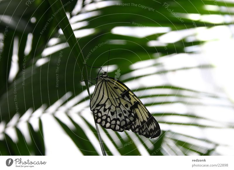 butterfly Butterfly Spotted Leaf Palm tree Calm Relaxation Nature Macro (Extreme close-up) Close-up Detail Free