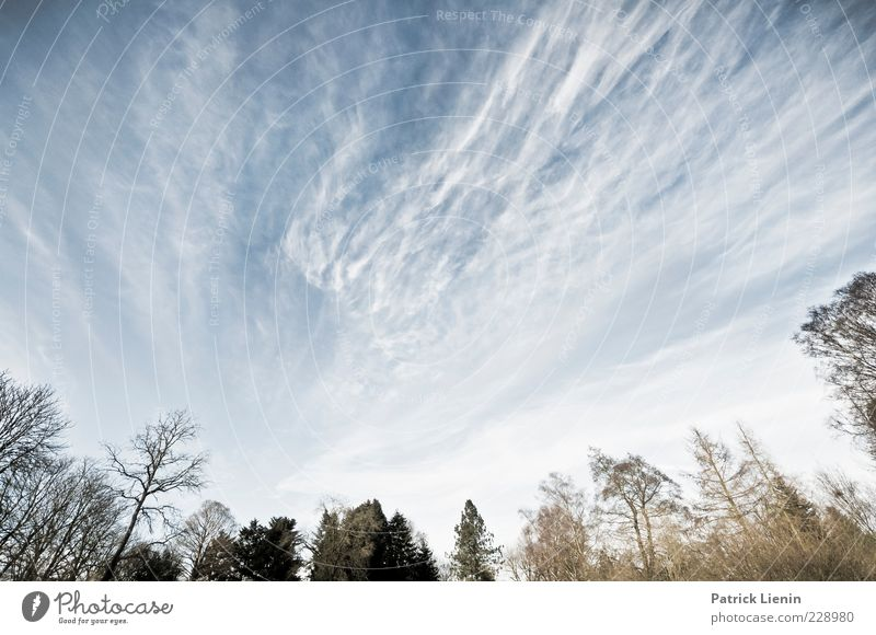 Sky Nature Blue White Beautiful Tree Plant Clouds Forest Environment Landscape Cold Air Horizon Weather Wind