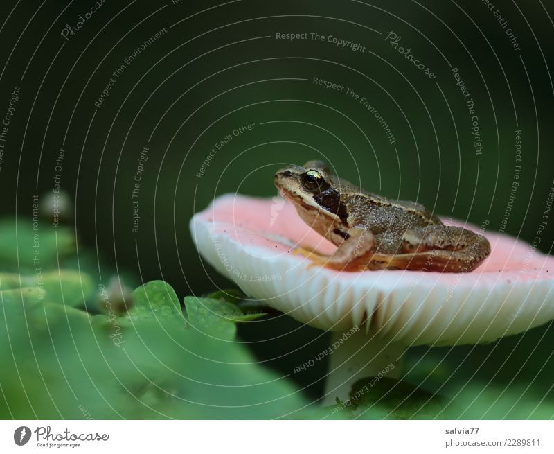 Nature Plant Green Animal Leaf Forest Autumn Exceptional Brown Pink Dream Wait Watchfulness Mushroom Strange Frog