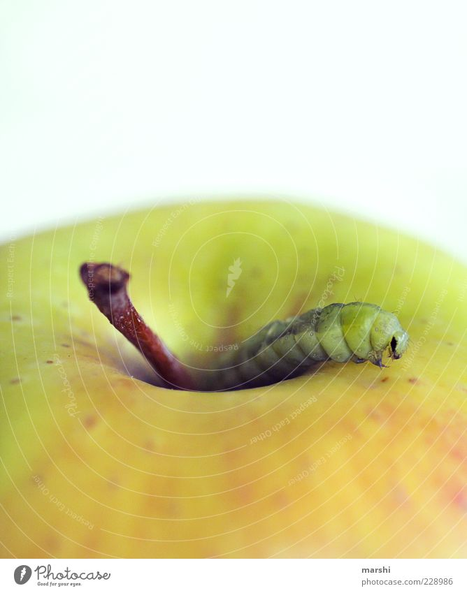 There's the worm inside. Food Fruit Apple Nutrition Organic produce Animal 1 Green Disgust Stalk Appetite Foraging Colour photo Caterpillar To feed