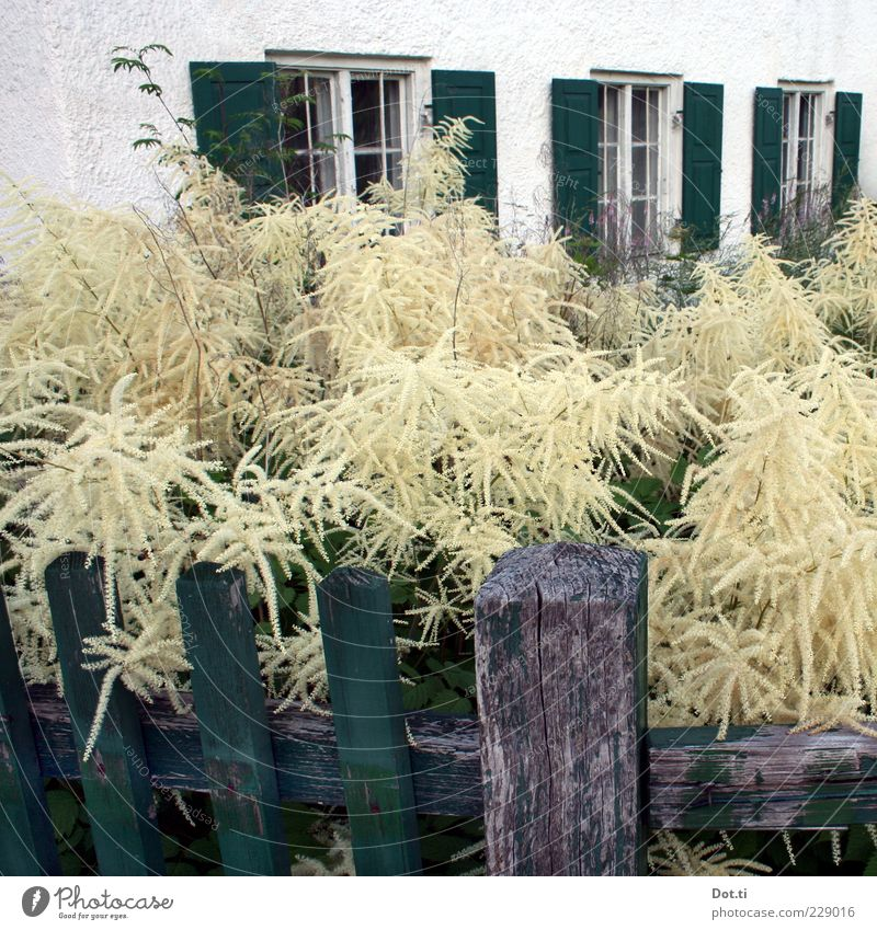 Nature Green White Plant House (Residential Structure) Window Garden Building Bushes Idyll Blossoming Fence Bavaria Wooden stake Shutter Lush