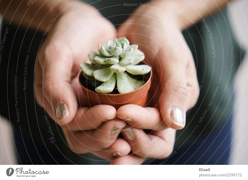 Holding Succulent Plant Leisure and hobbies Beginning Sustainability Succulent plants Green Gardening Spring Hand Detail Macro (Extreme close-up)