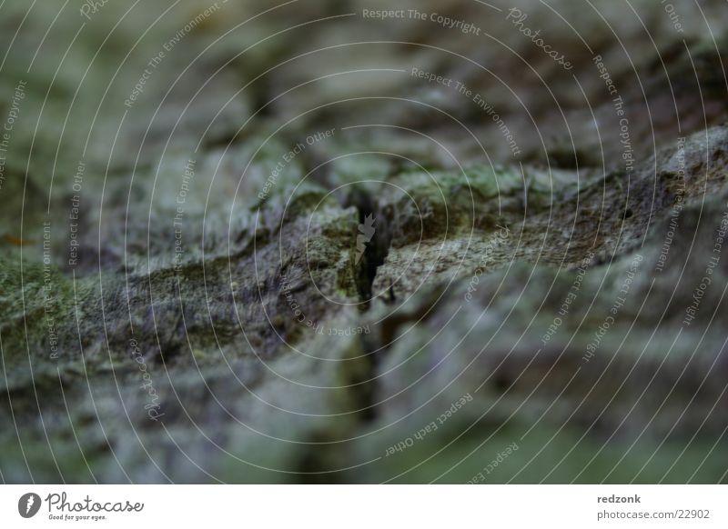 Nature Tree Gray Brown Crack & Rip & Tear Edge Strange Surface Column Tree bark