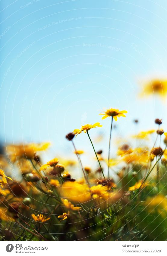 Nature Plant Summer Flower Calm Environment Yellow Meadow Spring Blossom Contentment Esthetic Beautiful weather Blossoming Stalk Blue sky