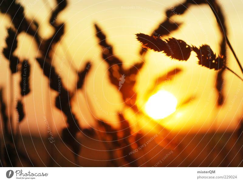 Nature Sun Summer Environment Warmth Sadness Bright Orange Contentment Wind Esthetic Future Hope Illuminate Romance End