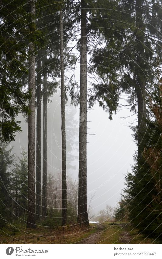 End of winter in the Black Forest Hiking Landscape Elements Winter Climate Fog Snow Tree Lanes & trails Tall Cold Moody Relaxation Leisure and hobbies Nature