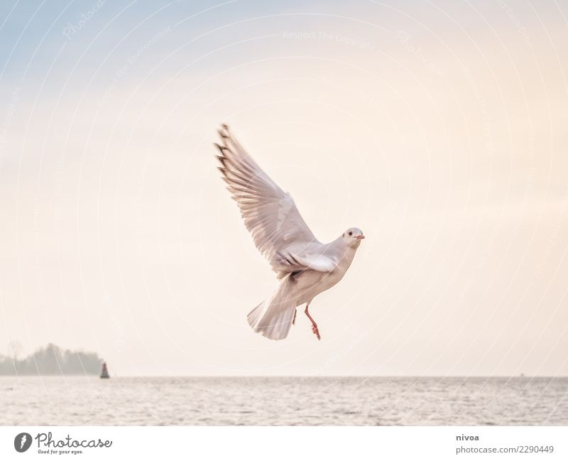 Sky Nature Landscape White Ocean Animal Life Environment Autumn Healthy Emotions Coast Bird Moody Flying Weather