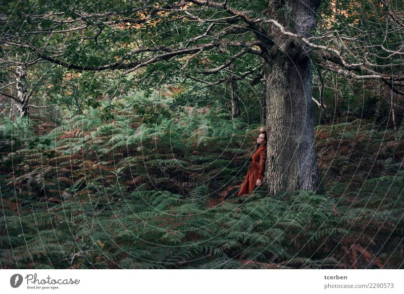 Portrait of woman leaning in a tree in a nice forest of ferns Woman Human being Nature Youth (Young adults) Plant Summer Green Landscape Calm Forest