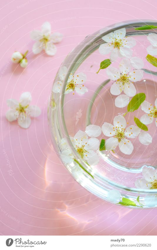 Spring white flowers in bowl of water Bowl Medical treatment Wellness Harmonious Relaxation Meditation Spa Massage Sauna Vacation & Travel Summer Mother's Day