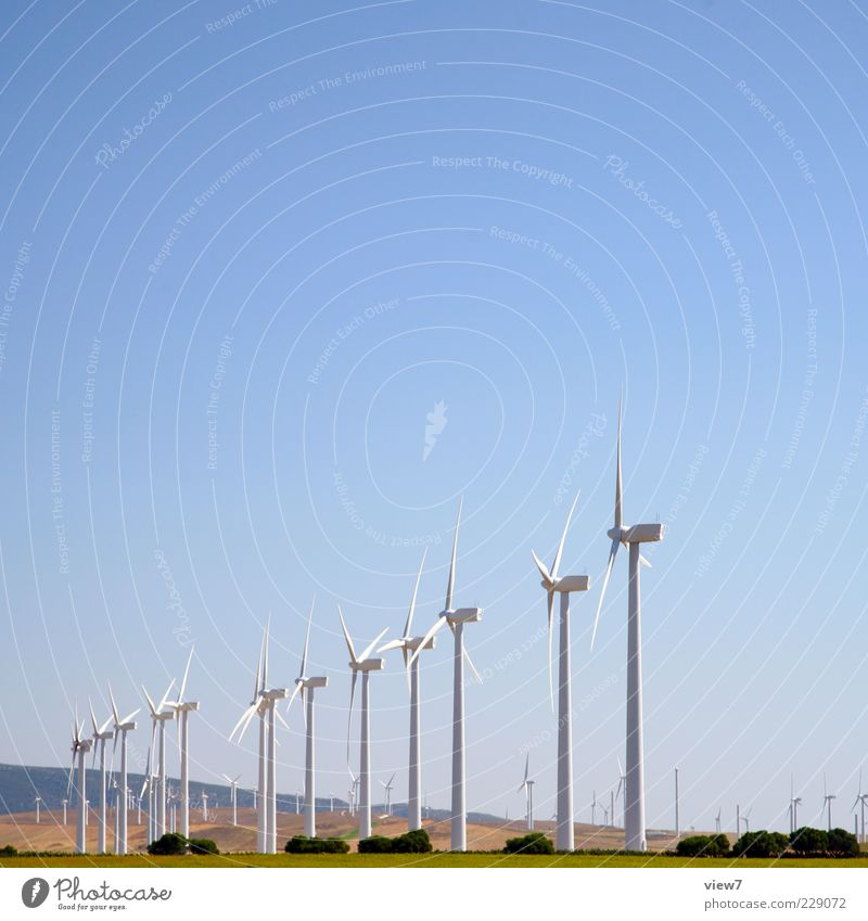 Nature Plant Summer Environment Landscape Tall Energy Energy industry Authentic Technology Many Wind energy plant Beautiful weather Ecological Climate change Sustainability