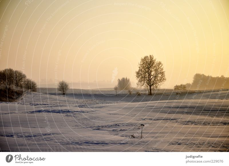 Sky Nature Tree Plant Winter Far-off places Snow Environment Landscape Moody Field Gold Natural Climate Idyll Weather