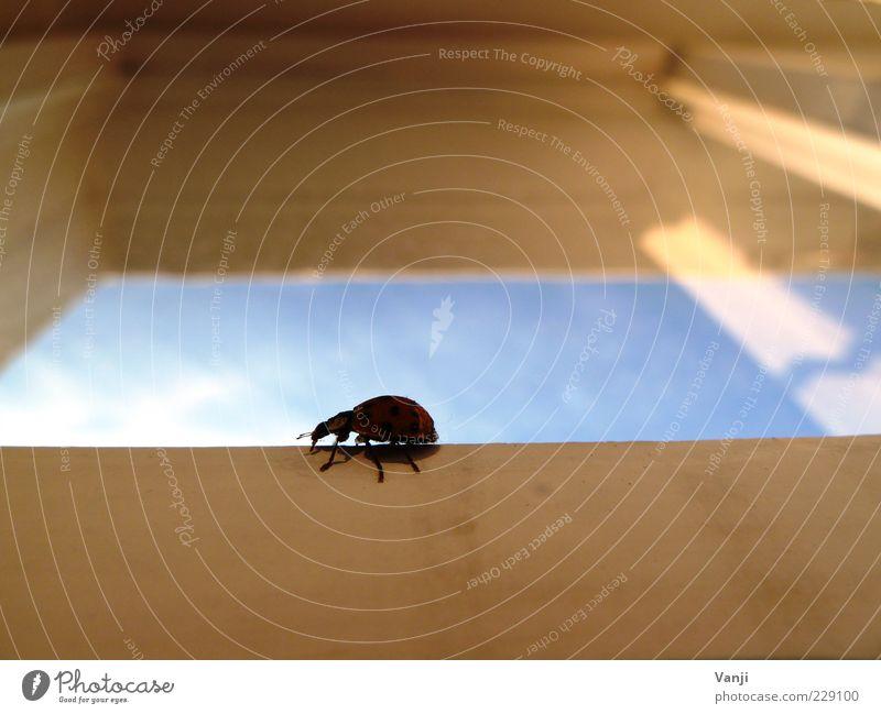 Blue Animal Window Wood Beetle Window pane Crawl Ladybird