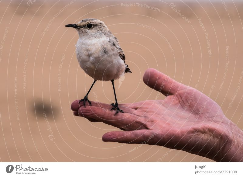 Nature Hand Animal Joy Environment Funny Bird Contentment Stand Beginning Cool (slang) Curiosity Serene Desert Trust Smart