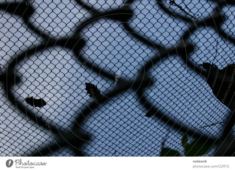 urge for freedom Fence Grating Wire netting Fold Barrier Black Things Looking Sky Freedom Net Penitentiary Blue Perspective Escape