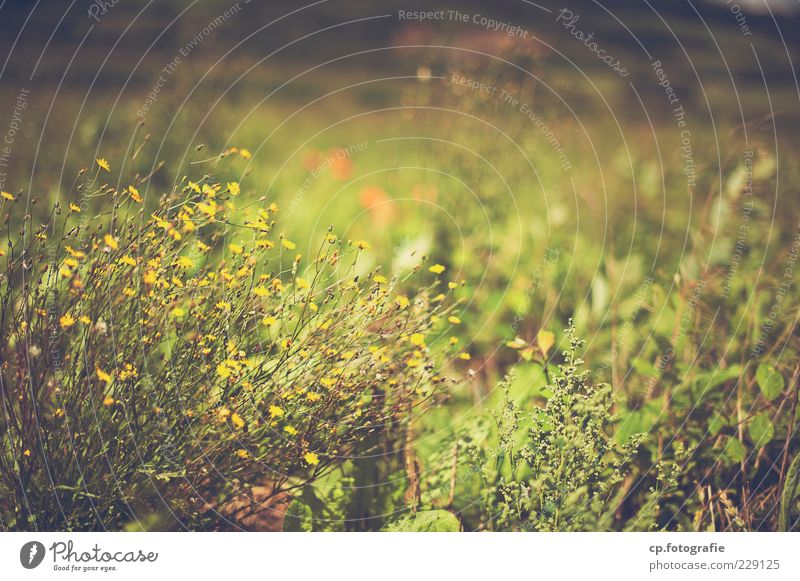 anticipation Nature Plant Sunlight Summer Beautiful weather Grass Bushes Blossom Foliage plant Wild plant Meadow Blossoming Faded Growth Natural Green Habitat