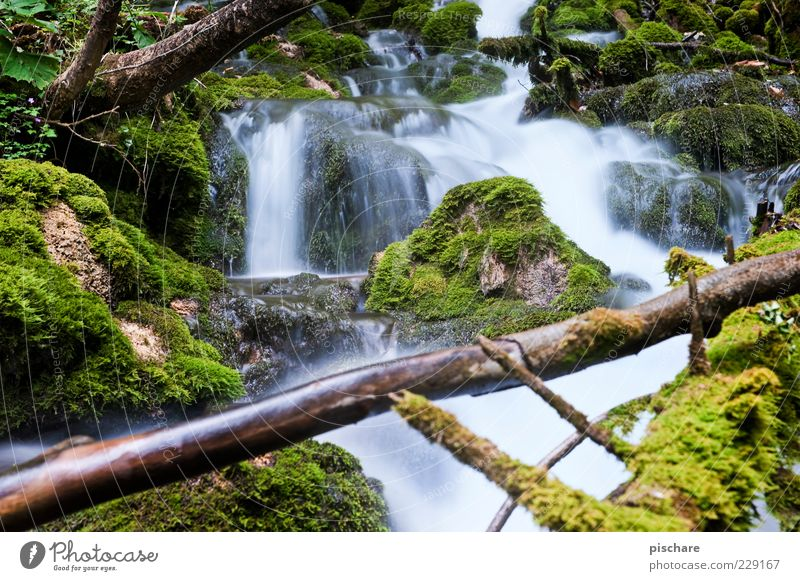 Nature Water Green Tree Calm Environment Contentment Natural Esthetic Elements Branch Moss Brook Flow Mountain stream