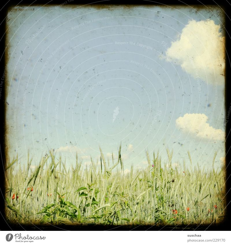 slightly cloudy to sunny ... Environment Nature Landscape Sky Clouds Summer Climate Weather Beautiful weather Agricultural crop Field Agriculture Grain Frame