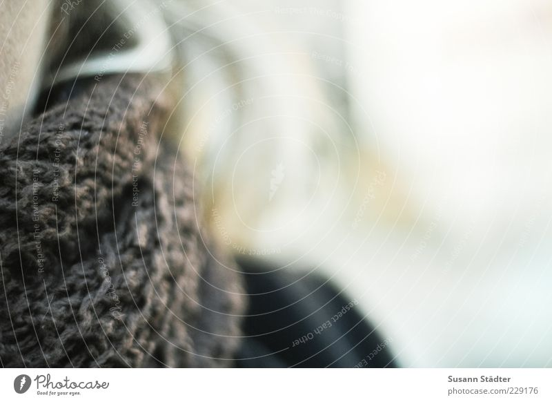 wrapped Hair and hairstyles Freeze Wool Scarf Blonde Neck Winter Protection Cold Colour photo Exterior shot Close-up Detail Structures and shapes