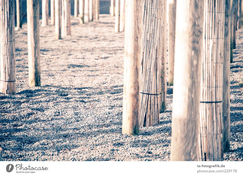 Optical dystopia I Environment Tree Stone Wood Line Brown Tree trunk Common Reed Gravel Pebble Colour photo Subdued colour Exterior shot Pattern