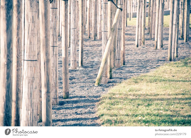 Optical dystopia II Environment Elements Plant Tree Grass Meadow Stone Wood Line Thin Long Brown Gray Green Tree trunk Common Reed Gravel Pebble Labyrinth