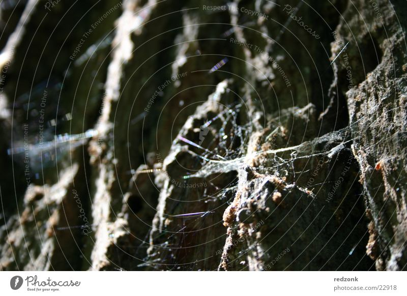 Old Tree Gray Stone Brown Rock Net Insect Spider Spider's web