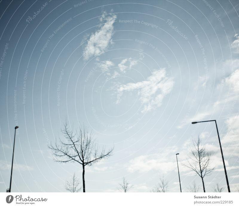 Sky Tree Winter Clouds Lantern Street lighting Bleak Clouds in the sky Leafless