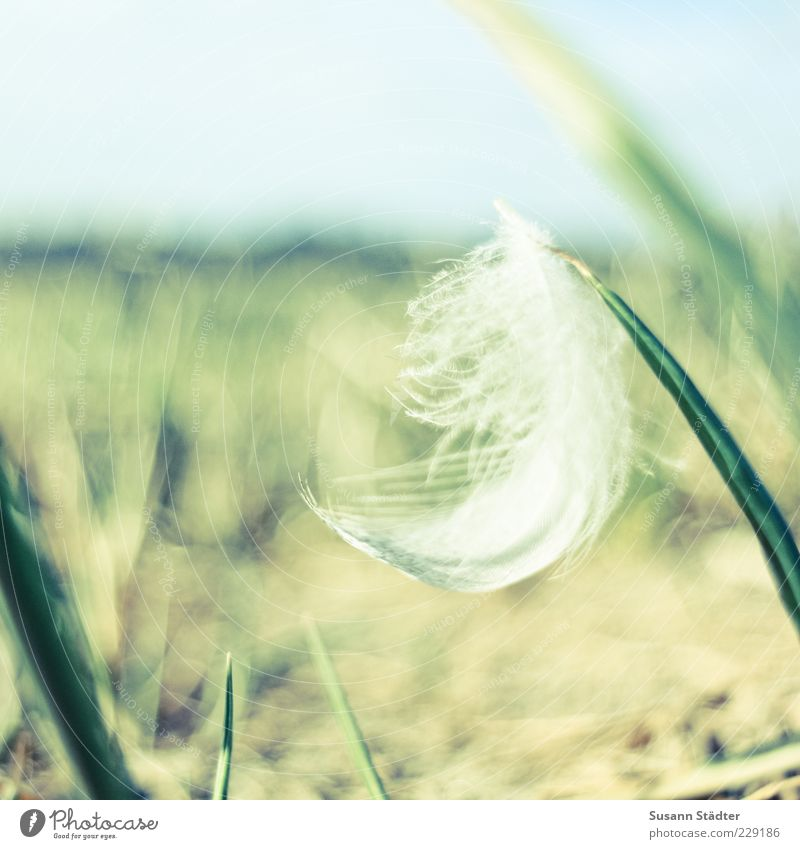 White Plant Meadow Garden Grass Contentment Esthetic Ground Feather Soft Delicate Peace Easy Blade of grass Ease Smooth