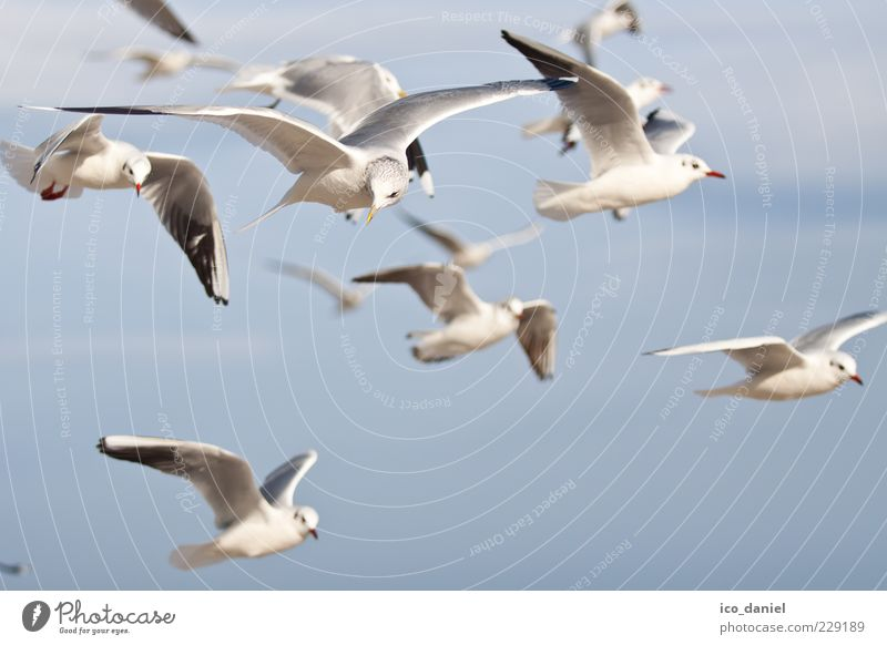 Nature Beautiful Air Bird Flying Wild animal Group of animals Many Seagull Flock Animal Flight of the birds