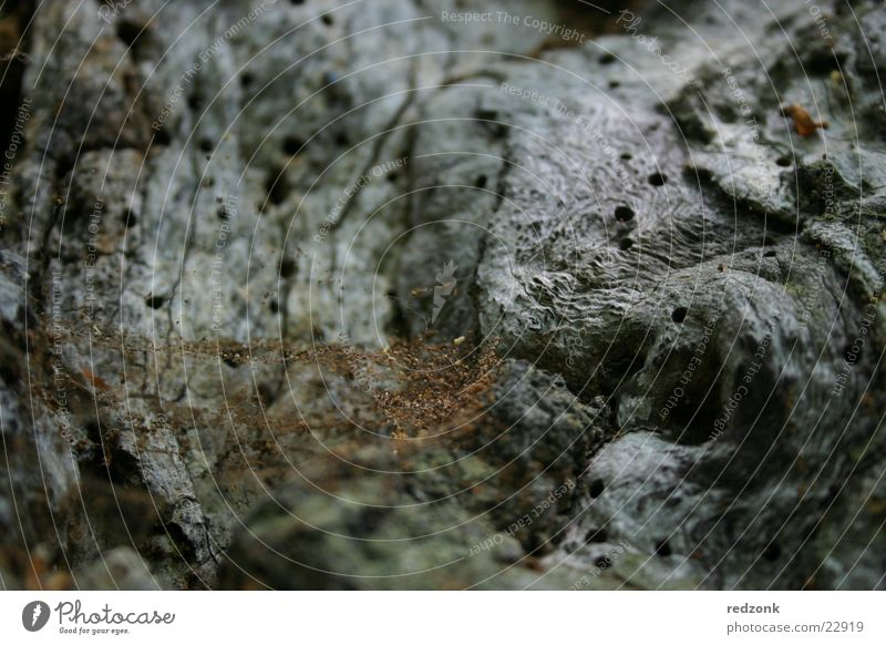 Old Tree Gray Stone Brown Rock Net Insect Spider Beetle Spider's web