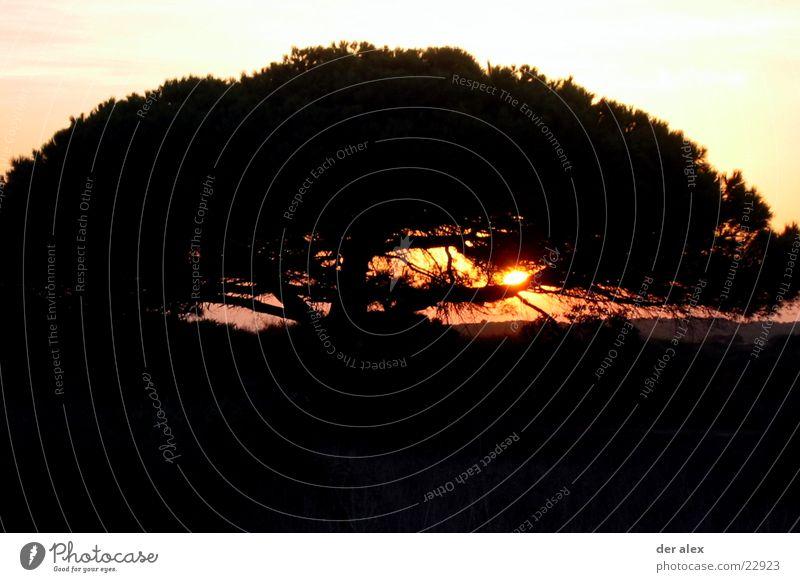 mimicking the tree trunk Sunset Back-light Tree Spain Black Loneliness Dark Fiery Hot Contrast Nature Evening Blaze