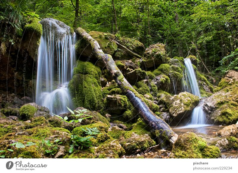 Nature Water Green Beautiful Tree Calm Environment Contentment Elements Tree trunk Moss Exotic Environmental protection Brook Waterfall Flow
