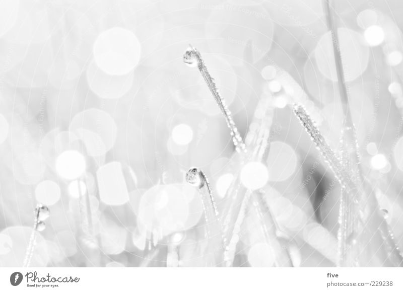 white Nature Water Drops of water Plant Meadow Bright Wet Natural White Smooth Blade of grass Small Easy Black & white photo Exterior shot Close-up Detail