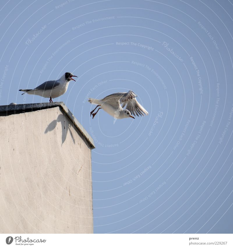 Sky Nature Blue White Wall (building) Gray Wall (barrier) 2 Bird Flying Beginning Wing Roof Goodbye Beak Shadow