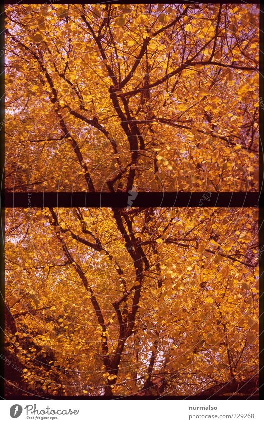 Nature Tree Leaf Colour Relaxation Autumn Moody Gold Glittering Beginning Lifestyle Illuminate Uniqueness Branch End