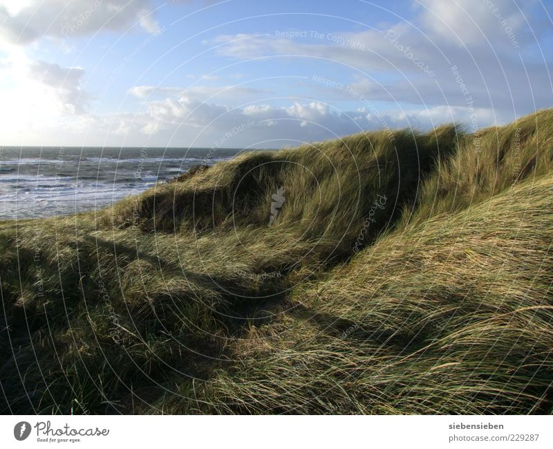 Sky Nature Water Plant Ocean Beach Calm Loneliness Far-off places Relaxation Autumn Freedom Landscape Grass Sand Coast