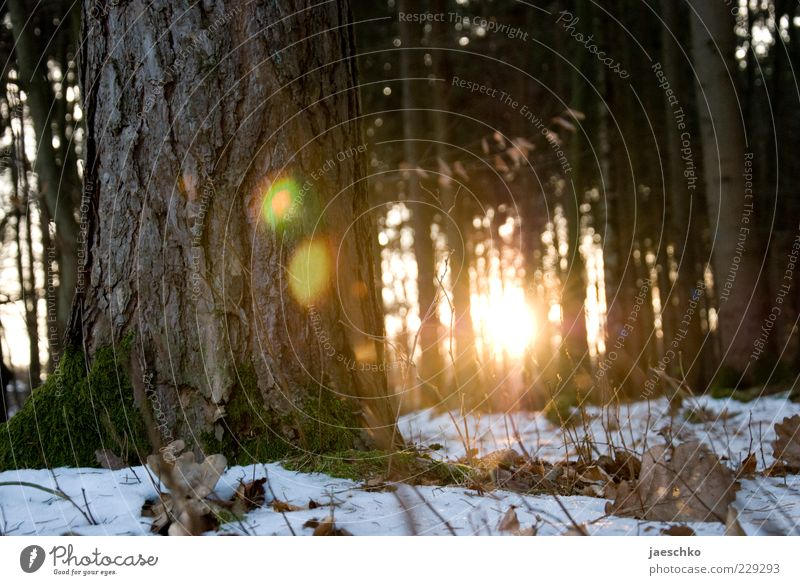 Kitsch in the Winter Forest II Environment Sun Sunrise Sunset Sunlight Climate Weather Beautiful weather Ice Frost Snow Tree Illuminate Woodground Winter forest