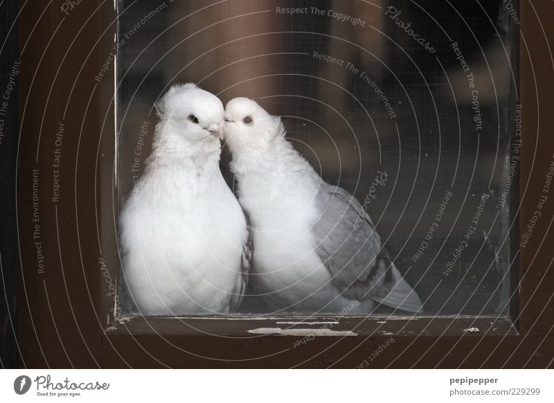 White Animal Love Relaxation Window Wood Gray Happy Dream Brown Bird Together Glass Pair of animals Sit Romance