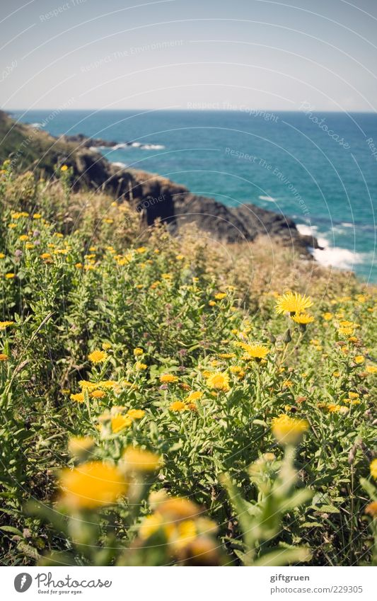 sea of flowers Environment Nature Landscape Plant Elements Water Sky Cloudless sky Horizon Sun Summer Flower Grass Leaf Blossom Meadow Rock Waves Coast Bay