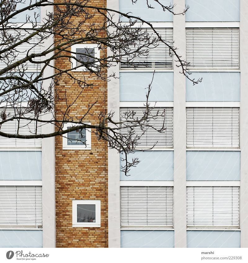 Blue White Tree City House (Residential Structure) Window Wall (building) Wall (barrier) Brown Closed Facade Car Window Branch Twigs and branches Roller shutter