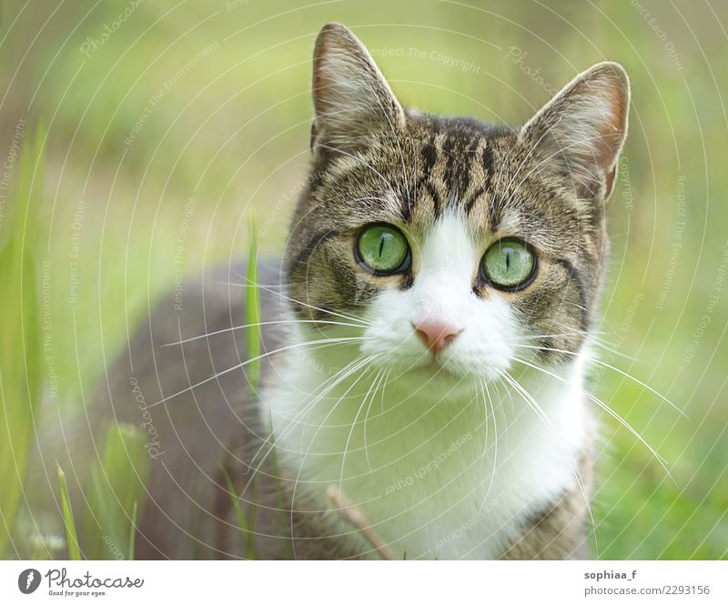 Cat Nature Beautiful Green Animal Joy Life Healthy Meadow Happy Freedom Contentment Happiness Joie de vivre (Vitality) Cute Observe