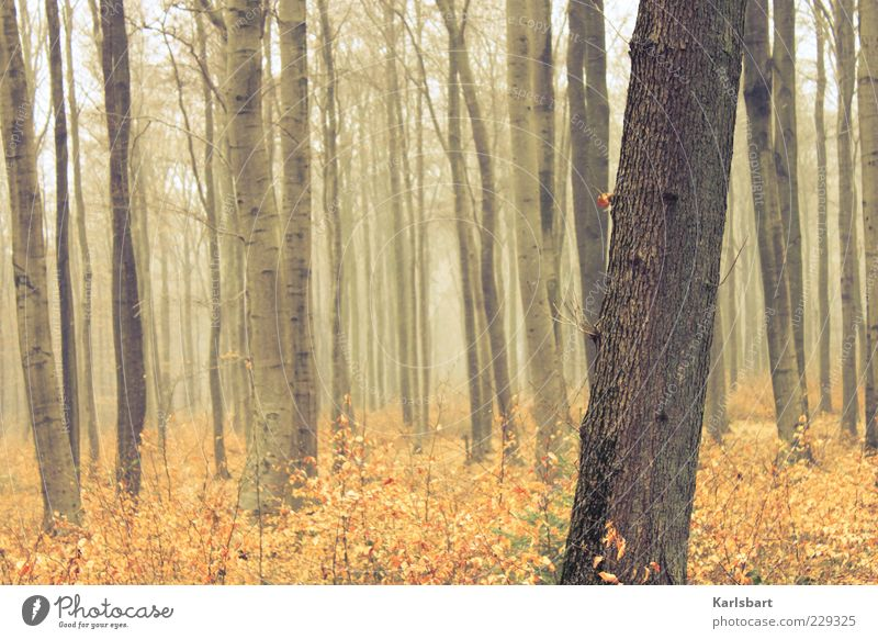 Nature Tree Plant Forest Autumn Life Environment Freedom Wood Lanes & trails Moody Weather Fog Trip Climate Growth