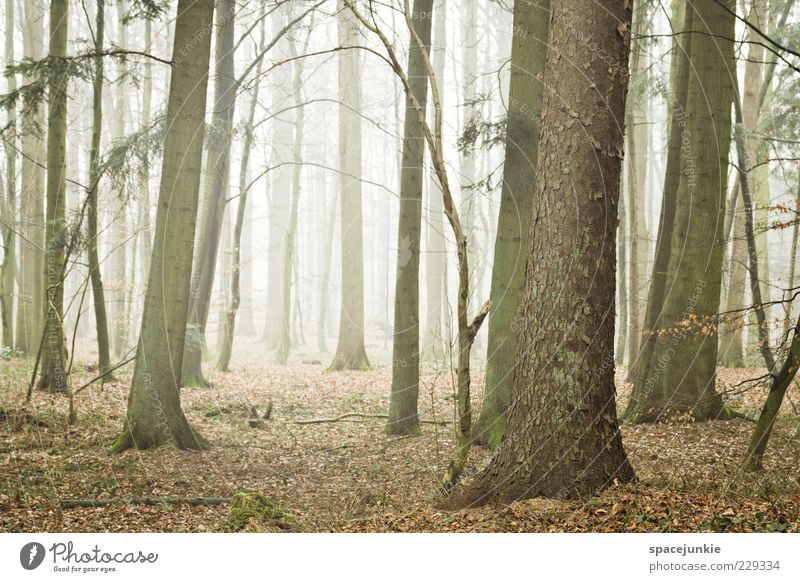 Nature Tree Plant Leaf Forest Environment Landscape Fog Tree trunk Haze Shroud of fog