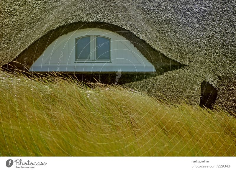 Nature White Plant House (Residential Structure) Environment Architecture Grass Building Moody Wild Roof Manmade structures Detached house Skylight Marram grass