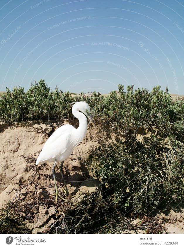 Sky Nature Blue White Plant Animal Environment Sand Climate Bushes Desert Heron